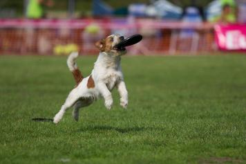 Du Belle Bijou Après Toi - Europees Kampioen Dogfrisbee