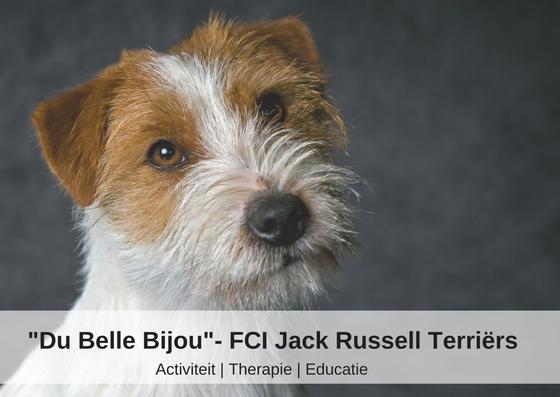 Du Belle Bijou- FCI Jack Russell Terriers